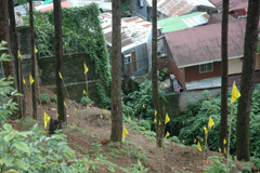Preserving The Old Baguio